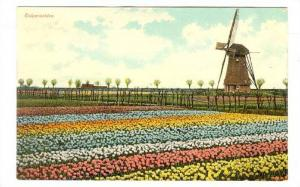 Tulip Field and Windmill, Netherlands, 10-20s
