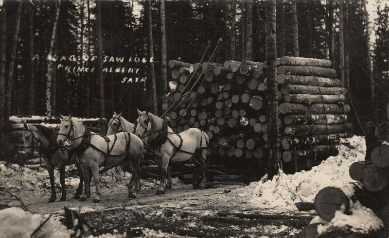 RP, PRINCE ALBERT, Saskatchewan, 1900-10s; A Load of Saw Logs
