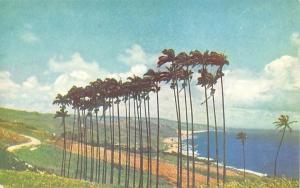 Barbados Cabbage Palms Trees Sea Landscape