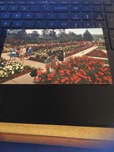 Vintage Postcard: Pageant of Roses Garden, Rose Hills Memorial Park Whittier CA