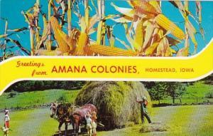Iowa Amana Greetings From Amana Colonies