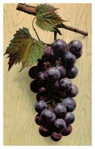 FREMONT, Ohio ~ Bunch of Black Grapes Shop Workers Strike Vintage Postcard