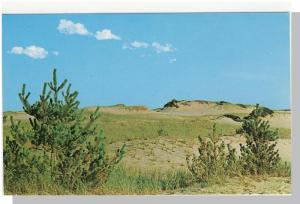 Tranquil Cape Cod, Mass/MA Postcard, Sand Dunes/Sea Grass