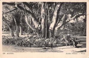 Algeria Alger Jardin d'Essai Ficus Tree, Native People