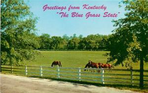Kentuck Bluegrass Horse Farms Rolling Hills Kentucky KY Postcard
