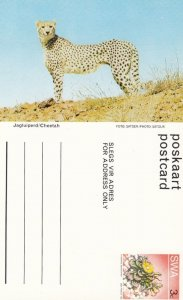South West Africa (SWA) now Namibia ; Cheetah , 40-60s