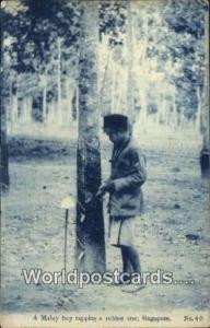 Singapore, Singapura Malay Boy, Tapping Rubber Tree Malay Boy, Tapping Rubber...