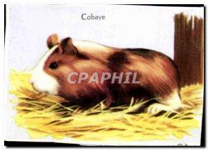 Image Guinea Pig