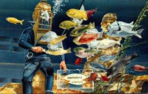 California Marineland Of The Pacific Diver Feeding Fish