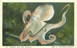 1938 Octopus New York Aquarium Zoological Society Postcard 3324
