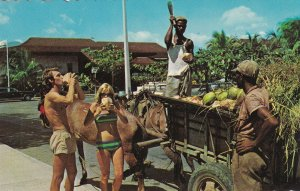 JAMAICA, 1950-1960s; Tourist Getting A Refreshing Drink Of Coconut Water