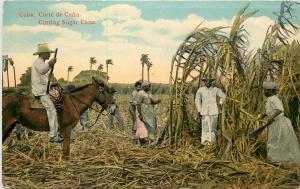 Vintage Postcard Cutting the Sugar Cane Crop  Cuba
