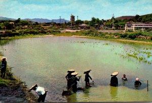 Taiwan Peasant Women and Buffalo