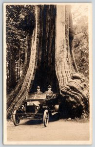 Vancouver BC~Stanley Park Big Hollow Drive Thru Tree~1914 LP# 6517 Auto~RPPC