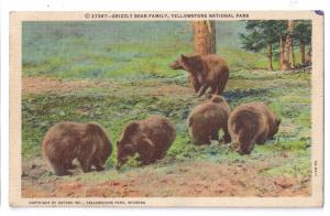 Grizzly Bear Family Yellowstone National Park Haynes Postcard 1948 Linen Curt