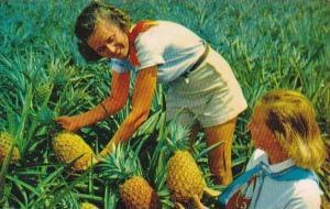 Hawaii Luscious Pineapple