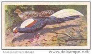 Brooke Bond Vintage Trade Card Wildlife In Danger 1963 No 31 Swinhoe's P...
