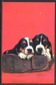 Pair of Puppies and a Shoe