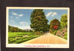 PA Greetings from TAMAQUA PENN Postcard Linen Pennsylvania
