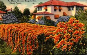 Florida Miami Beautiful Home With Flame Vine and Bougainvillea