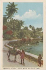 Jamaica KIngston Wayfarers With Donkey