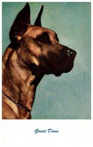 Dog , Great Dane