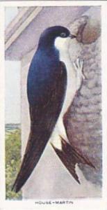 Carreras Vintage Cigarette Card Birds Of The Countryside 1939 No 17 House Martin