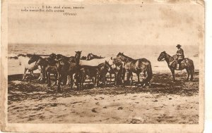 Horseman and horses in the plain Vintage Italian postcard