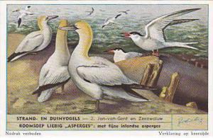 Liebig Trade Card S1610 Birds Of Beaches & Dunes No 2 Jan-van-Gent en Zeezwaluw