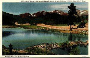 Colorado Rocky Mountains Estes Park Trail Ridge Road At The Beaver Dams In Th...