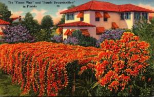 Florida Spanish Type Home and Flame Vine 1953
