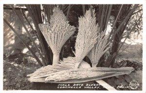 LPS79 Indio California Male Date Blossoms Coachella Valley Frashers RPPC