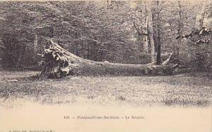 Fontainebleau-Barbizon.-Le Briaree , France, 00-10s