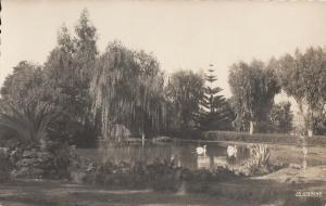Morocco Port-Lyautey public garden swans photo postcard