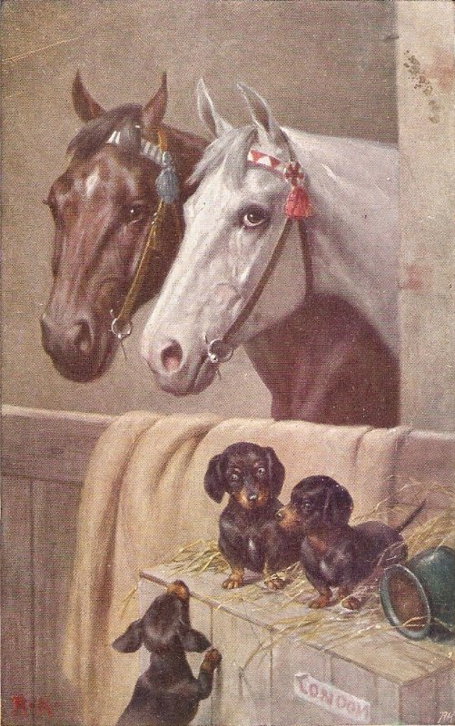 Horses and dogs at the stbl Nice vntage German postcard