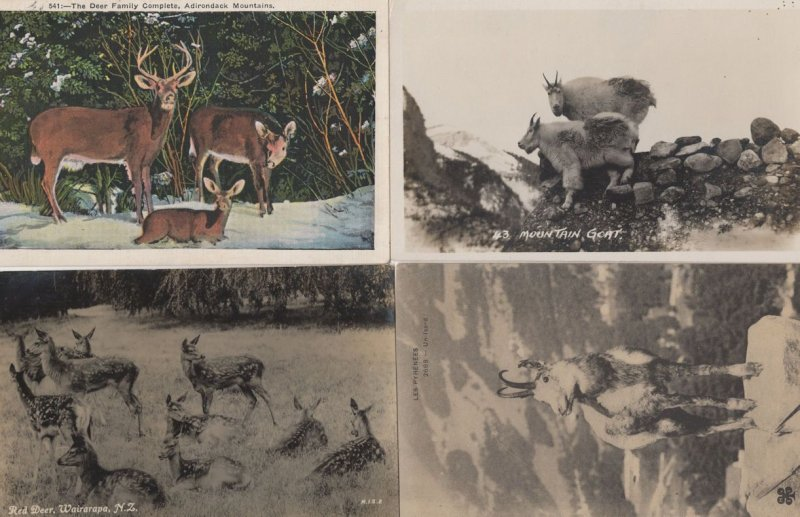 New Zealand Red Deer Mountain Goat 4x Old Postcard s