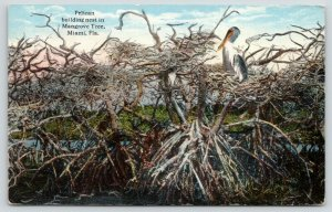 Miami Florida~Pelican Builds Nest in Mangrove Tree~c1910 Postcard