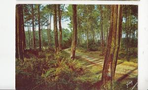 BF21745 route dans la foret landaise landscape france  front/back image