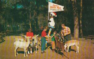 Florida Silver Springs Santas South PoLe Tommy Bartletts Deer Ranch