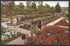 California, Whittier - Pageant Of Roses Garden - [CA-410]