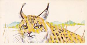 Brooke Bond Vintage Trade Card Vanishing Wildlife 1978 No 5 Spanish Lynx