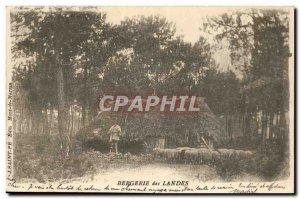 Sheepfold Landes Postcard Old Sheep Shepherd