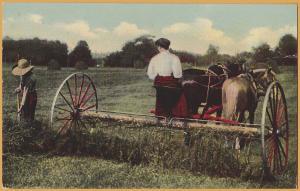Lady driving horse drawn hay rake -