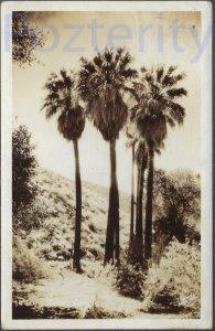 PALM TREE IN DESERT RPPC 1937