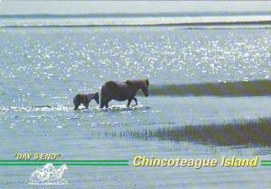Wild Pony Mare And Foal Chincoteague Island Virginia
