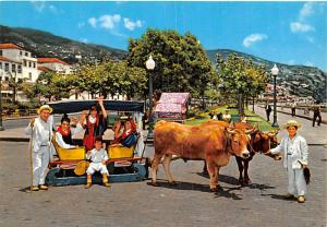 Bullock Carro - Madeira