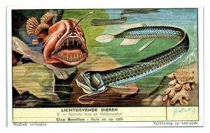 Scaly Dragonfish & Angler Fish, Luminous Animals Liebig Belgian Trade Card