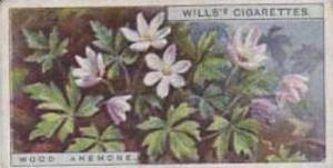 Wills Vintage Cigarette Card Wild Flowers Series No. 1 Wood Anemone 1923