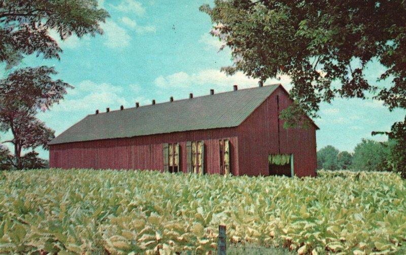 Vintage Postcard Tobacco Barn Field Scott County Kentucky KY By Lusterchrome
