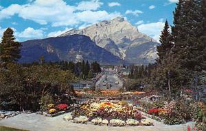 Canada Canadian Rockies, Alpine Gardens, Banff Avenue and Cascade Mt.